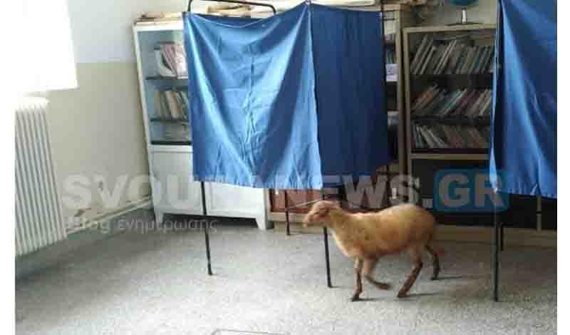Καστοριά: Πρόβατο μπήκε σε εκλογικό κέντρο