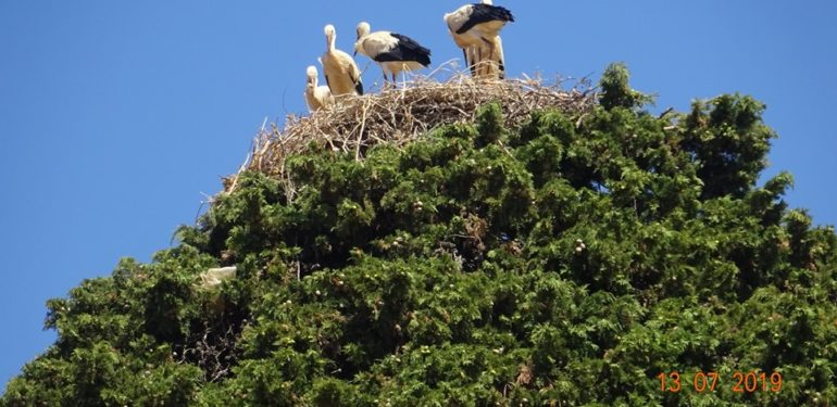 Πελαργοί έχτισαν φωλιά και… οικογένεια στην Μονή Αρκαδίου! | ΦΩΤΟ