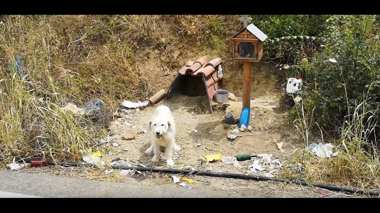 Ο… Χάτσικο της Ελλάδας: Σκύλος περιμένει το νεκρό αφεντικό του σχεδόν 2 χρόνια