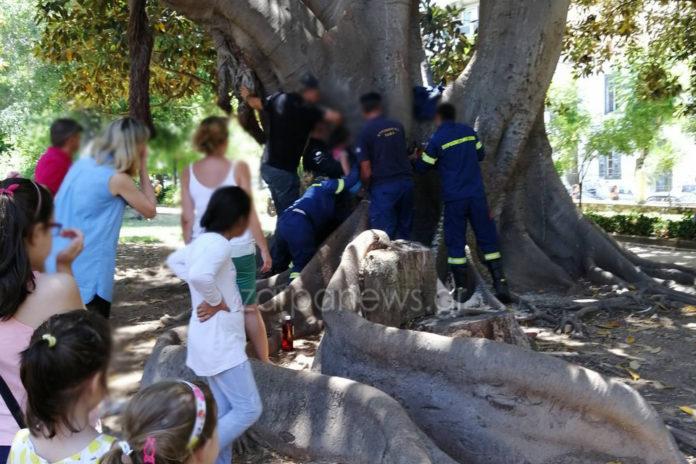 Παγιδεύτηκε παιδάκι σε δέντρο στον Δημοτικό Κήπο Χανίων – Δείτε τι έκανε η Πυροσβεστική | Photos