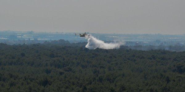 Πυρκαγιά στη Μεγαλόπολη σε δασική έκταση