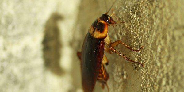 Θέμα χρόνου οι κατσαρίδες να γίνουν σχεδόν… ασταμάτητες
