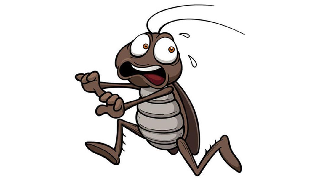 Κάν' το και δεν θα σε ξαναπλησιάσει κατσαρίδα