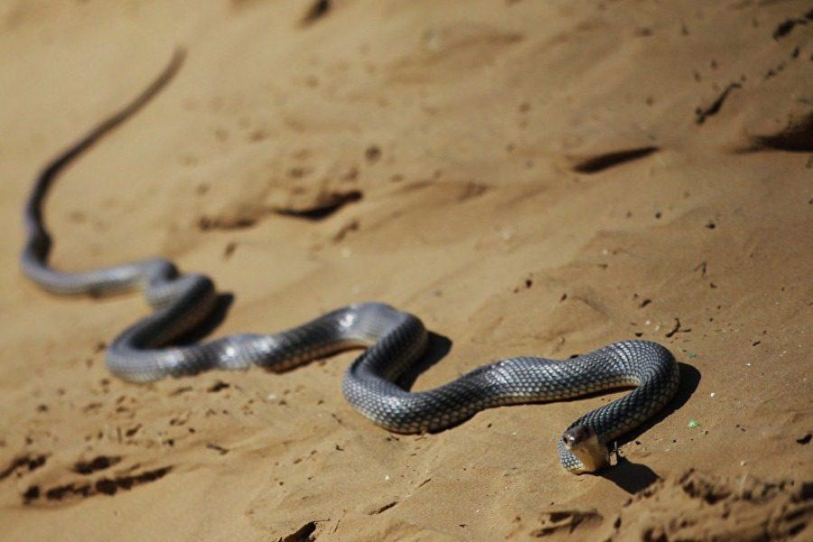 Ανδρας δάγκωσε και σκότωσε φίδι