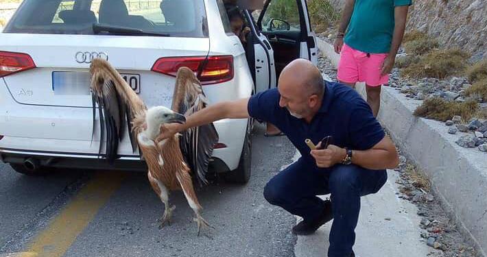 Κρήτη: Ο Γυπαετός συμπάθησε… όσο δεν πάει τον δήμαρχο Σφακίων! | ΦΩΤΟ