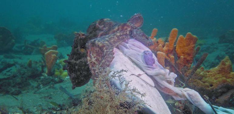 Χταπόδι-τέρας κατασπαράζει Καρχαρία με μανία! | ΒΙΝΤΕΟ