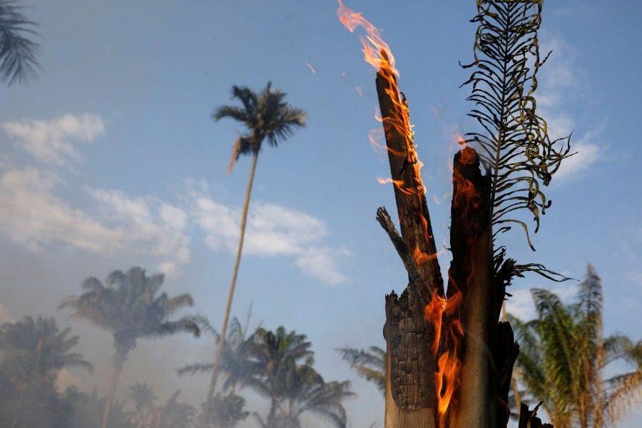 Πώς ξεκίνησαν οι φωτιές του Αμαζονίου;
