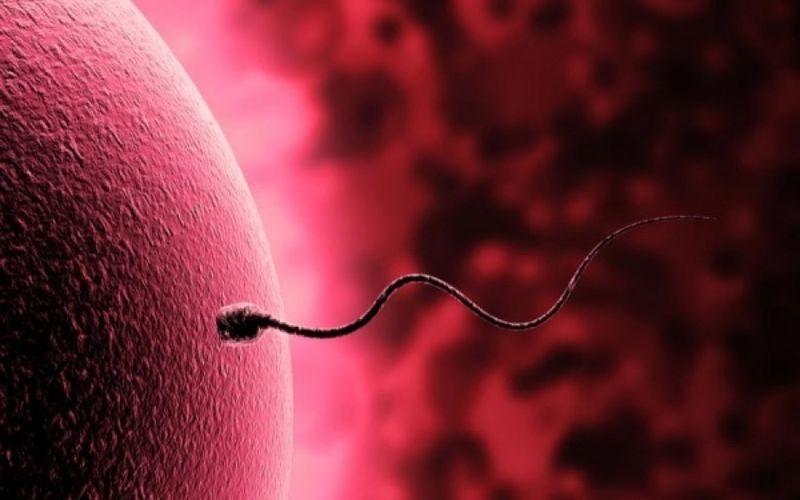 Πόσο ζει το σπέρμα μέσα στον κόλπο