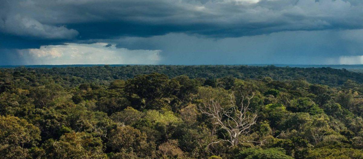 Πώς χρησιμοποιούν τις συνήθεις πυρκαγιές στον Αμαζόνιο για να επιβάλλουν νέους φόρους για το κλίμα