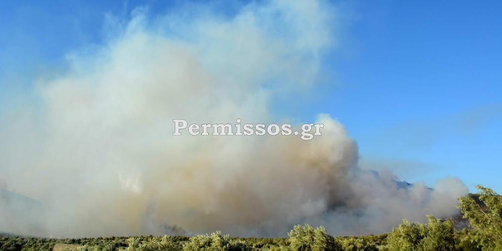 Προς τον Κορινθιακό κόλπο, κατευθύνεται η φωτιά που έχει ξεσπάσει στον Πρόδρομο Βοιωτίας
