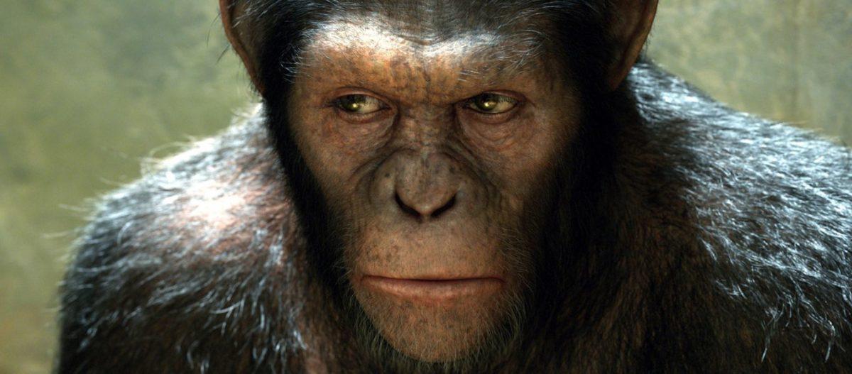 Σοκαριστικό πείραμα στην Κίνα: Επιστήμονες δημιούργησαν το πρώτο υβρίδιο ανθρώπου με πίθηκο