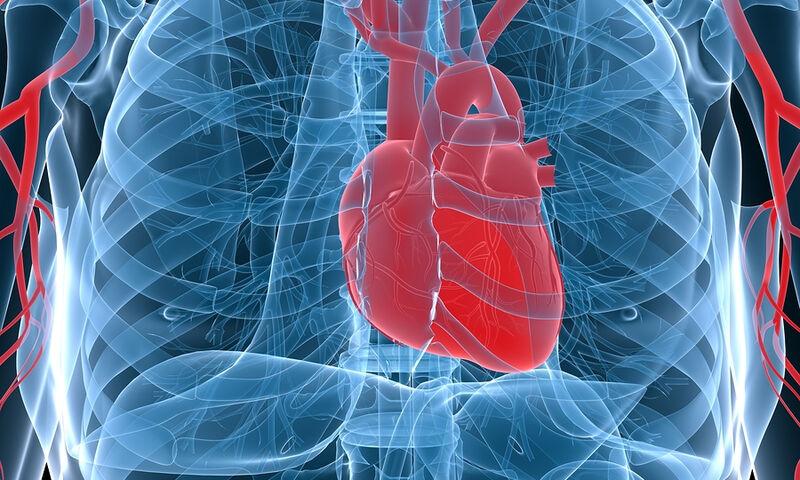 Μεταμόσχευση καρδιάς χοίρου σε άνθρωπο προβλέπουν οι επιστήμονες εντός τριετίας