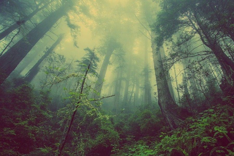 Το δασάκι στην Πάτρα που έκρυβε ένα παράξενο μυστικό