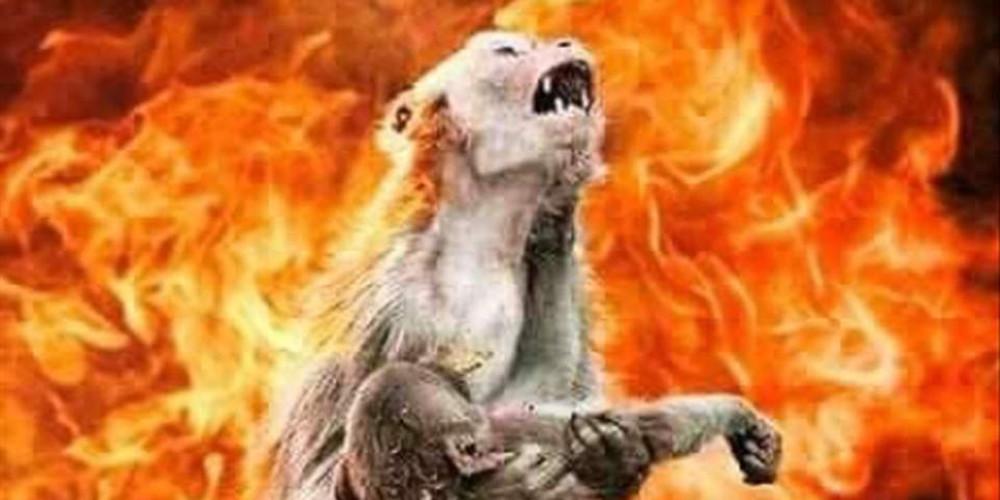 Προϊόν photoshop η φωτογραφία με τη μητέρα μαϊμού που κλαίει στον Αμαζόνιο