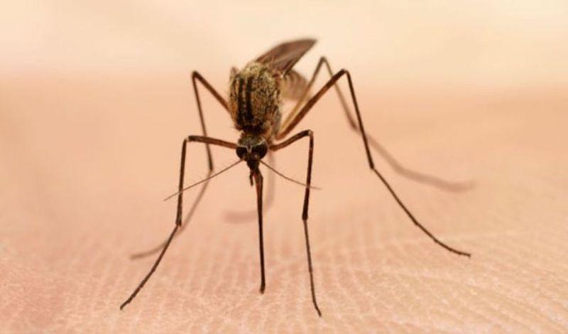 Αρχίζουν αεροψεκασμοί για κουνούπια στον κάμπο Θεσσαλονίκης