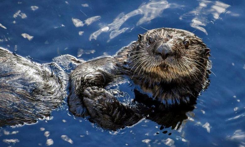 Αυτό είναι το πιο αρρωστημένο ζώο στη φύση – Αποκεφαλίζει και βιάζει!