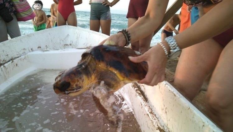 Βρέθηκε τραυματισμένη θαλάσσια χελώνα – Την έσωσαν λουόμενοι!