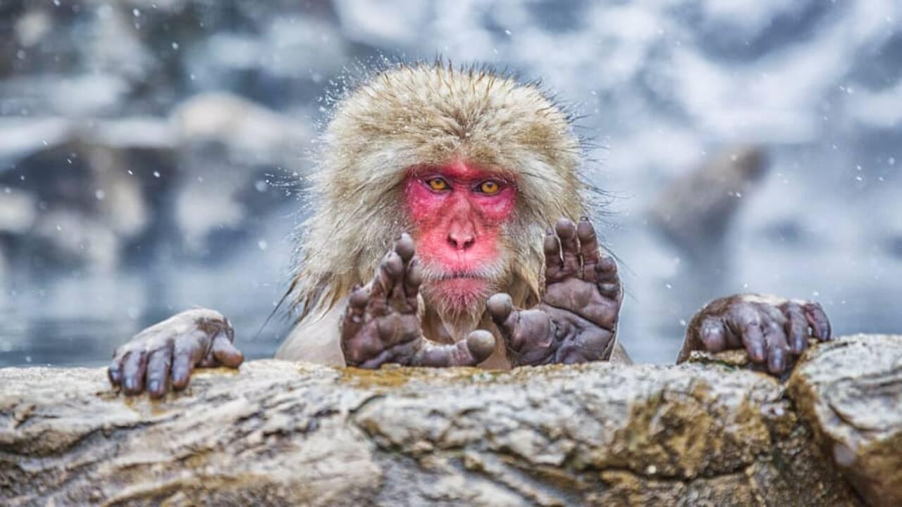 Οι κωμικοί της φύσης: Άγρια ζώα σε ξεκαρδιστικές πόζες
