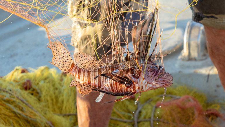 Εντυπωσιάζει το λεοντόψαρο στα δίχτυα Κρητικού ψαρά