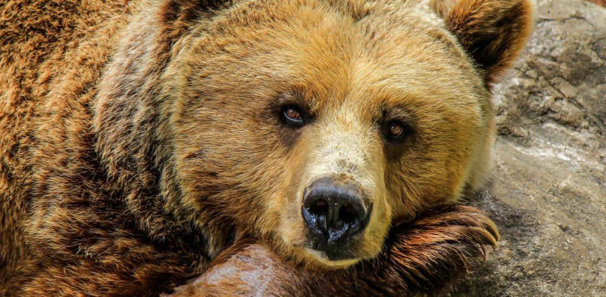 Αρκούδα έκανε βόλτες σε χωριό της Κοζάνης (vid)