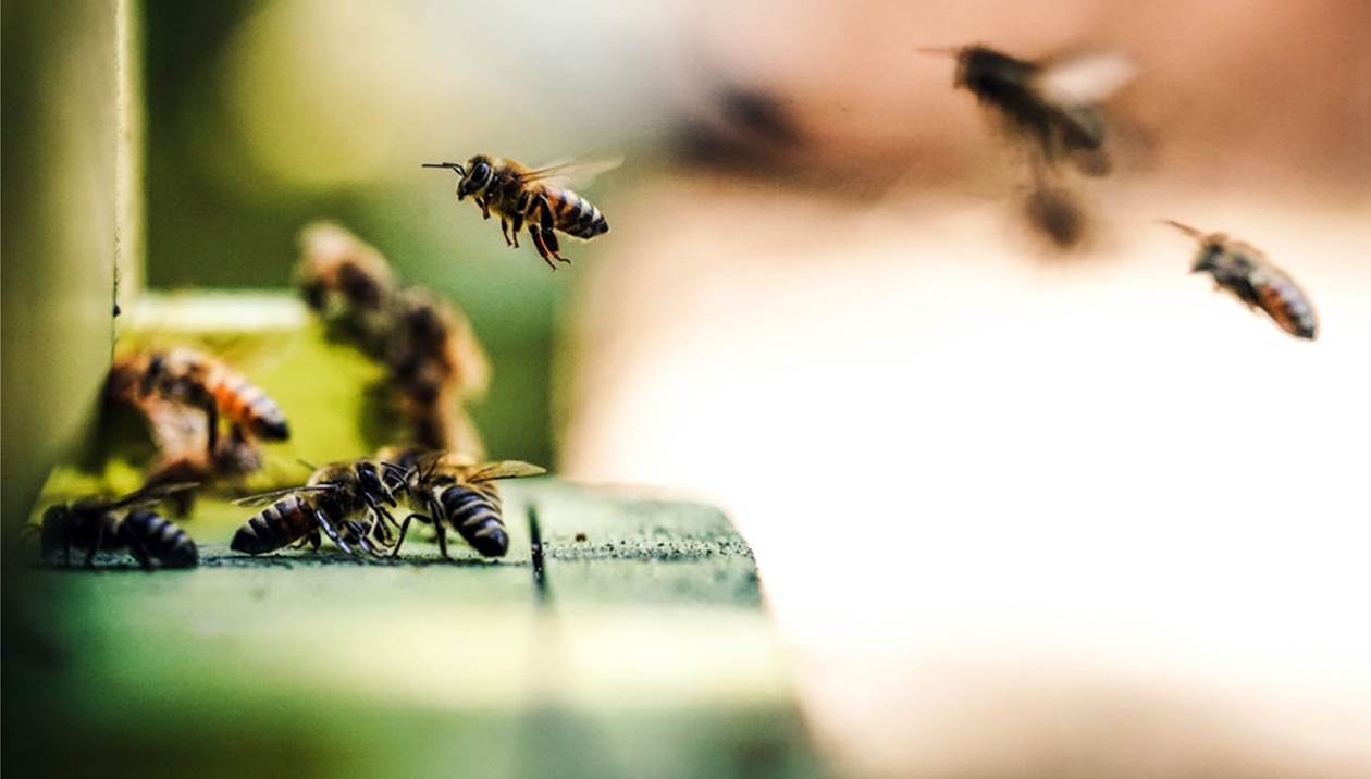 Εξαπατούσαν εταιρείες σε Κρήτη & Αττική: Με πλαστές επιταγές πήραν τροφές για μέλισσες