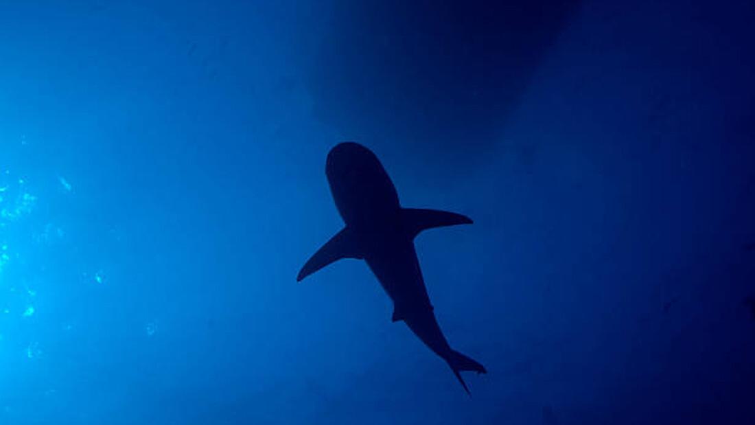 Για καλό και για κακό: Πώς να επιβιώσεις από επίθεση καρχαρία