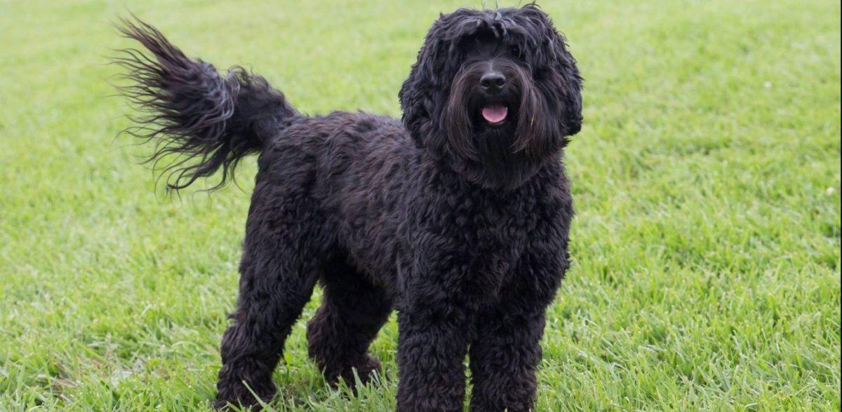 Ο δημιουργός του «σκύλου-Φρανκενστάιν» εξομολογείται: Άνοιξα το κουτί της Πανδώρας