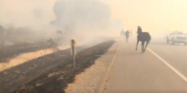 Καλιφόρνια: Άλογο μπαίνει στις φλόγες για να σώσει την οικογένειά του (vid)