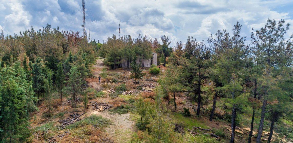Πύργος: Δύο νεκροί στο δάσος της Στροφυλιάς ενώ έκοβαν ξύλα
