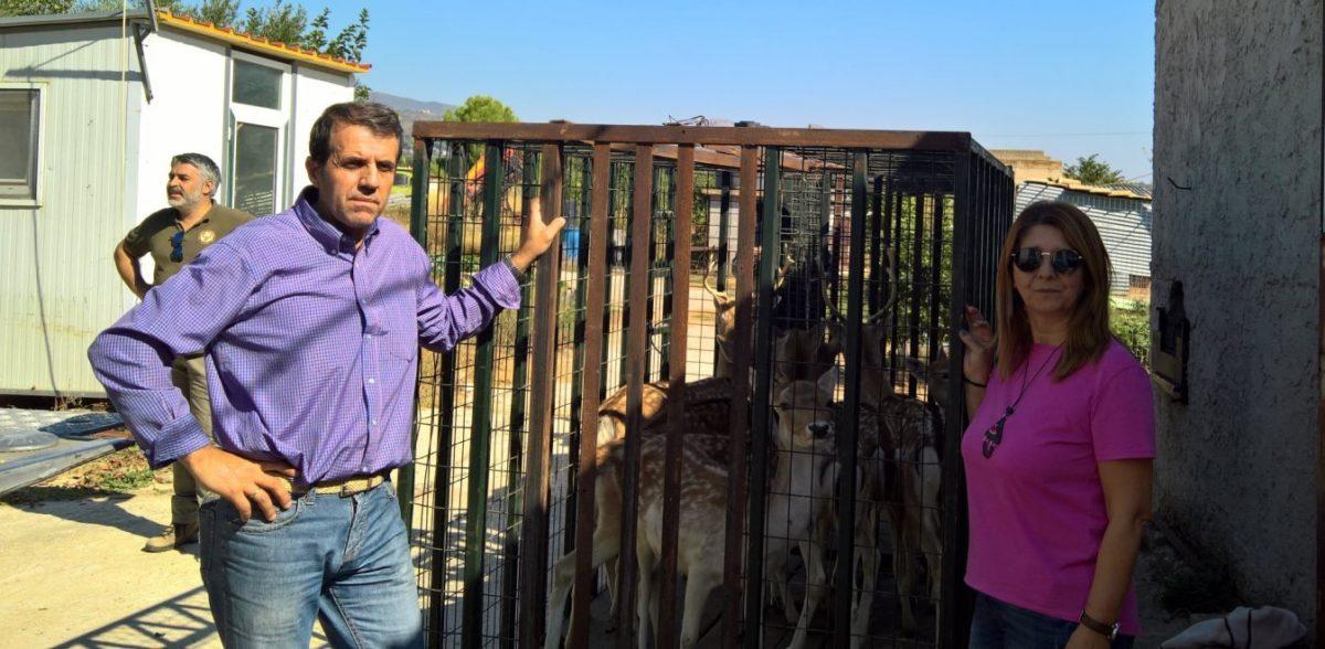 27 ελάφια βρέθηκαν σε… μαντρί – Μάστιγα η παράνομη αιχμαλωσία άγριων ζώων