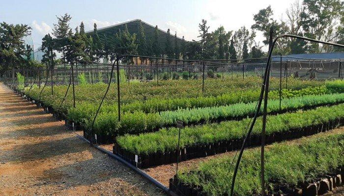 Δωρεάν φυτά από το δασικό φυτώριο Φοινικιάς – Ποιοι τα δικαιούνται;