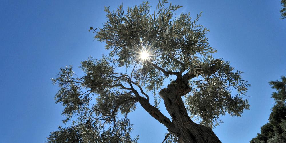 Πρόγνωση καιρού: Θα θυμίζει Άνοιξη ο καιρός την Παρασκευή