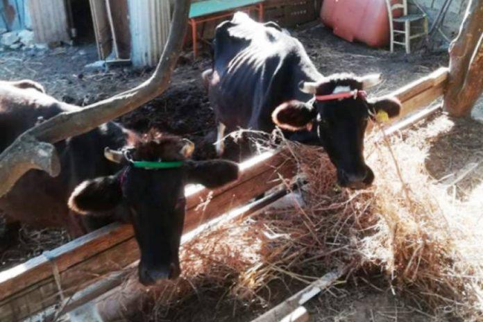 Κρήτη: Πρόστιμο 2.100 ευρώ σε ιδιοκτήτη για παθητική κακοποίηση ζώων