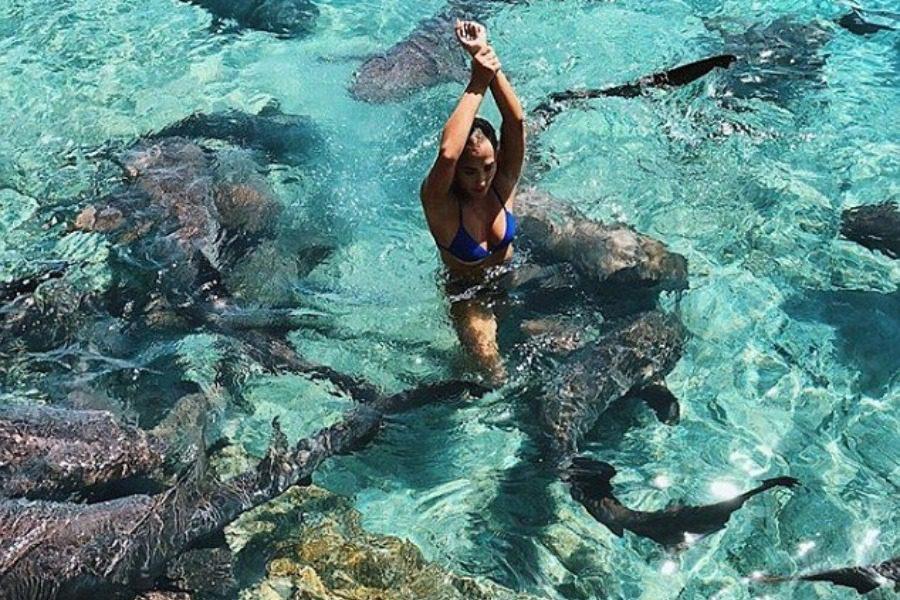 Φωτογραφιζόταν ανάμεσα σε καρχαρίες ώσπου ένας την άρπαξε