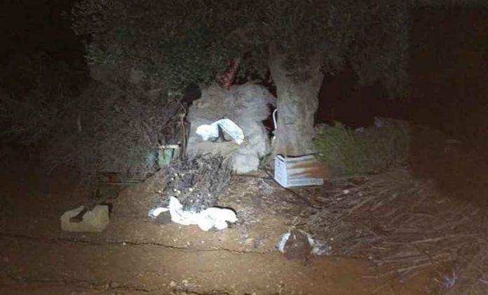 Κρήτη: Σύλληψη λαθροκυνηγού! Μέχρι και… αχλάδια είχε βάλει για να πιάσει λαγούς!