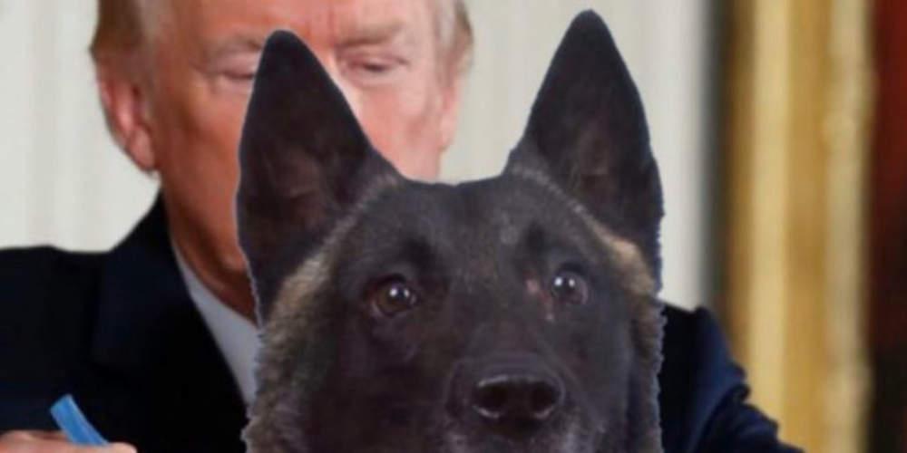 Το «τερμάτισε» ο Τραμπ: «Παρασημοφόρησε» με μετάλλιο-πατούσα τον σκύλο που συνέβαλε στην επιχείρηση κατά του Μπαγκντάντι