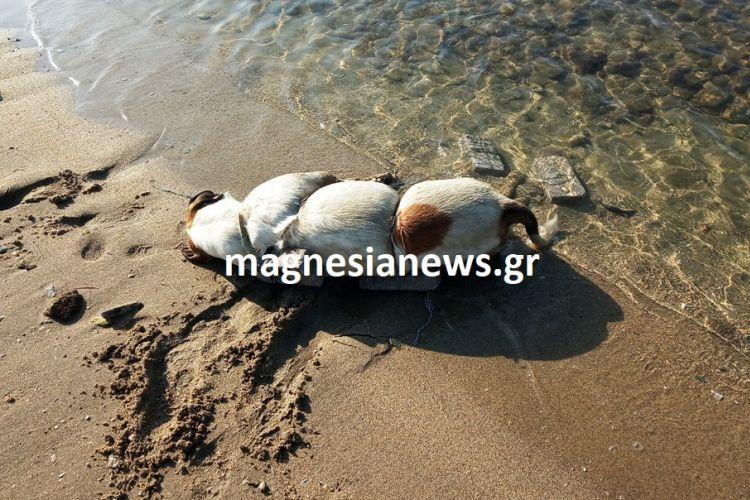 Φρίκη στον Βόλο: Έδεσε σκύλο με πέτρες και τον πέταξε στη θάλασσα