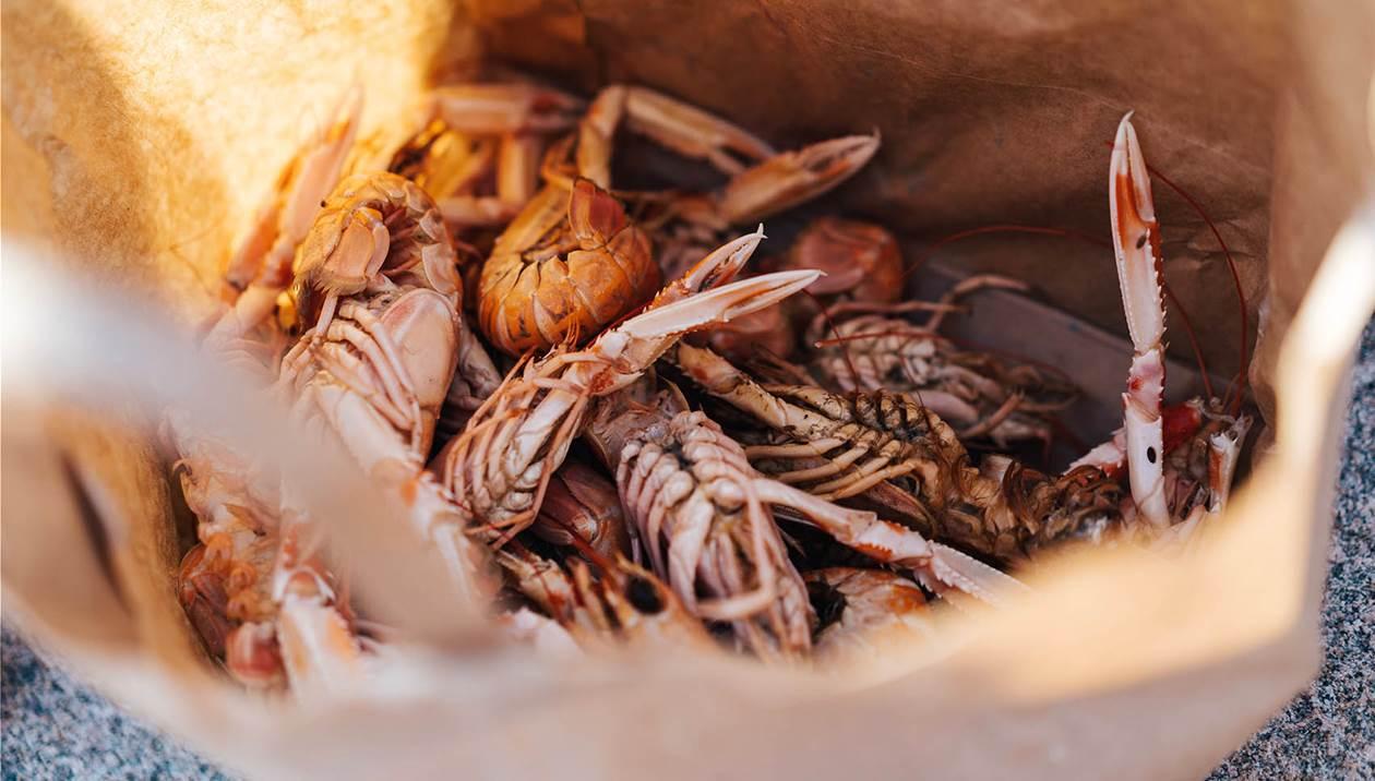 Στο «σφυρί» τεράστια ποσότητα θαλασσινών και ψαριών