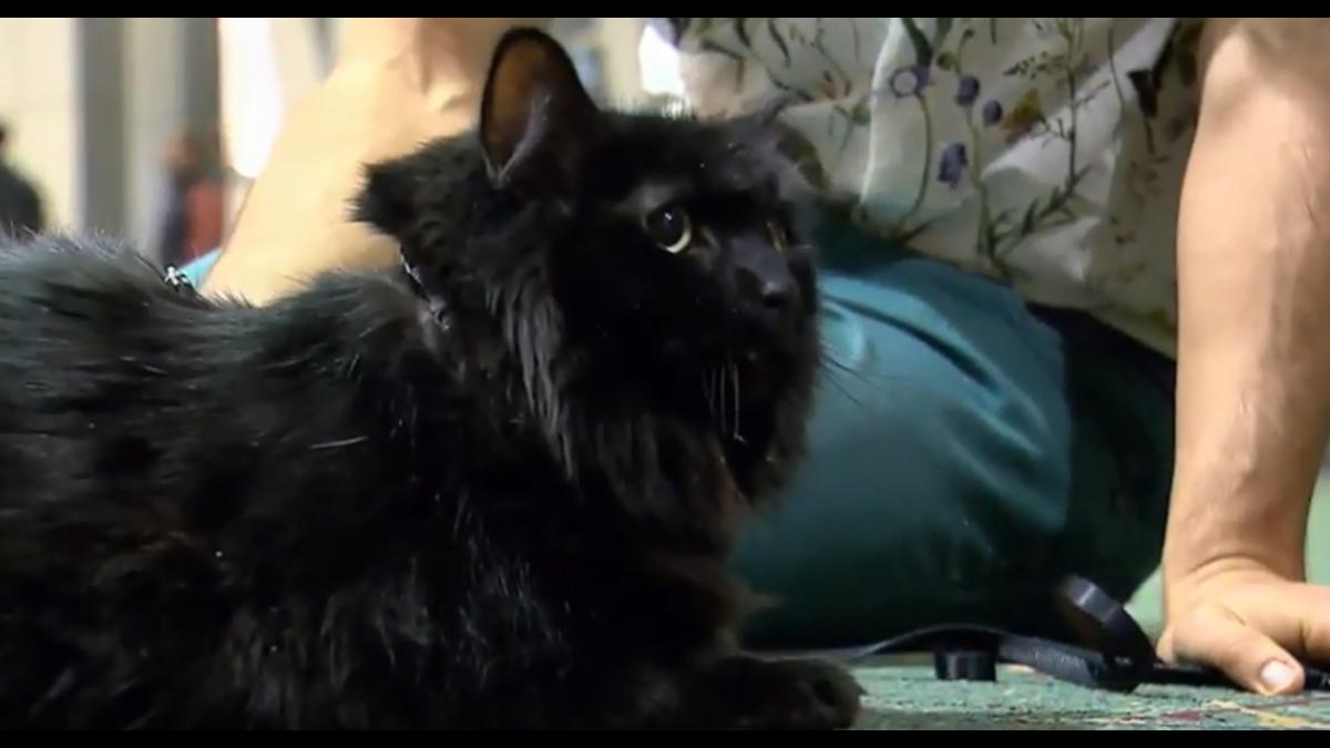 Απίστευτη περιπέτεια: Εξαφανισμένος γάτος εντοπίστηκε μετά από πέντε χρόνια… 1.900χλμ μακριά