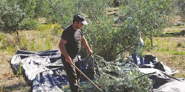 Νέο σύστημα: Αγρότες και ελεύθεροι επαγγελματίες θα επιλέγουν τη σύνταξή τους