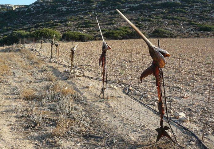 Ξιφίες στη στεριά… Δείτε τον πιο απίστευτο φράχτη της Κρήτης (pic)
