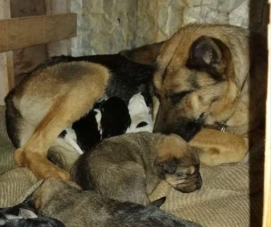 Bρέθηκε η νέα μητέρα για τα πέντε κουτάβια