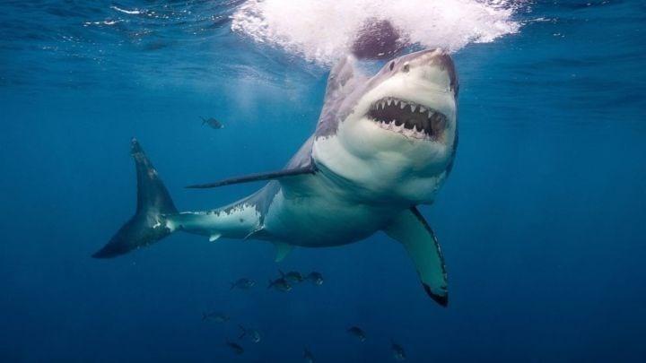 Σοκαριστικός θάνατος για 70χρονο: Τον κατασπάραξε καρχαρίας τίγρης - Τι βρήκαν στο στομάχι του