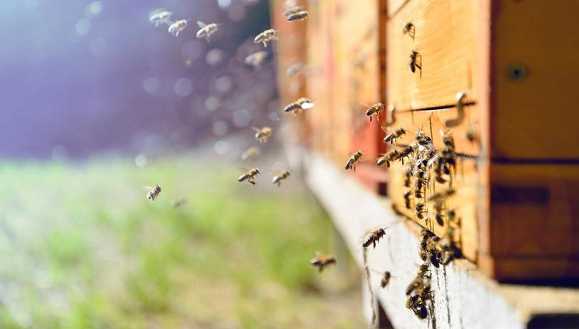 Κινδυνεύουν οι Μέλισσες – Χημικός τρόμος τις απειλεί από τη χρήση φυτοφαρμάκων
