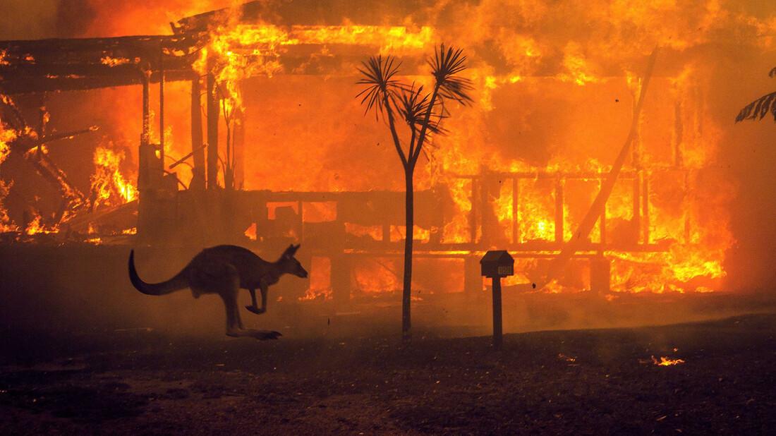 Η καταστροφή της πανίδας στην Αυστραλία μας αφορά όλους