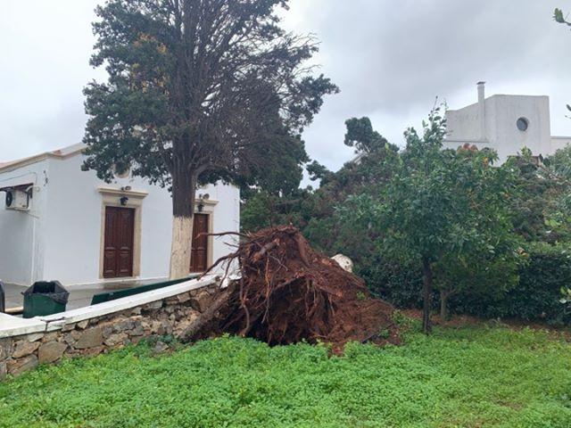 Χανιά   Ξεπάτωσαν τεράστιο κυπαρίσσι έξω από εκκλησία στα Κουνουπιδιανά οι θυελλώδεις άνεμοι   Photos