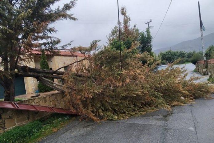 Πτώσεις δέντρων στα Χανιά προκάλεσαν οι θυελλώδεις άνεμοι – Από θαύμα δεν υπήρξε τραυματισμός