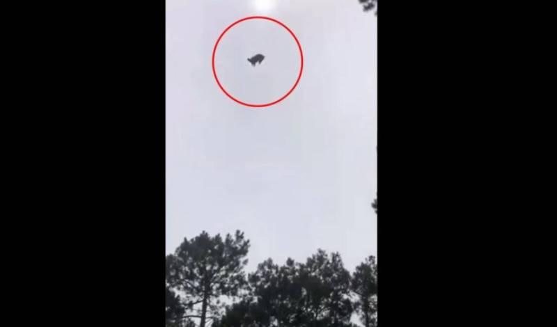 Πρωτοφανές περιστατικό στην Ουρουγουάη: Έριξαν νεκρό γουρούνι από ελικόπτερο σε πισίνα