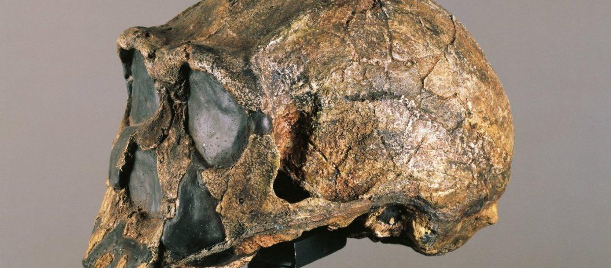 Ανακαλύφθηκε πληθυσμός «φάντασμα» στη δυτική Αφρική – Έζησε πριν από μισό εκατομμύριο χρόνια! (φώτο)