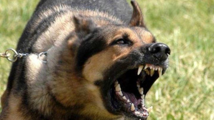 Κρήτη: Λυκόσκυλο επιτέθηκε σε 13χρονο αγόρι